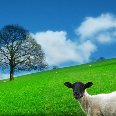 Bio4Fresh! Naturalny oczyszczacz powietrza. Zmniejsza ilość alergenów w otoczeniu!