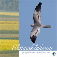 Folder: Błotniak łąkowy - sprzymierzeniec rolników