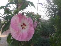 Gigantyczne kwiaty