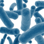 Probiotic your way to ultimate Health